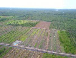Pengembangan Food Estate Kalimantan Tengah Sentuh Solidaritas Masyarakat