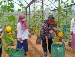 Yuk ke Agroeduwisata Kebun Bibit Cilangkap, Destinasi Wisata Pertanian Ibu Kota