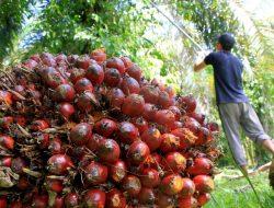Indonesia Berpotensi Jadi Raja Industri Hilir Sawit