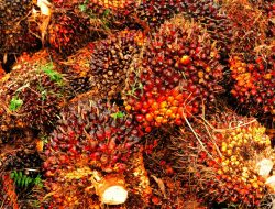 Industri Sawit Masih Jadi Andalan Kinerja Neraca Perdagangan Nasional