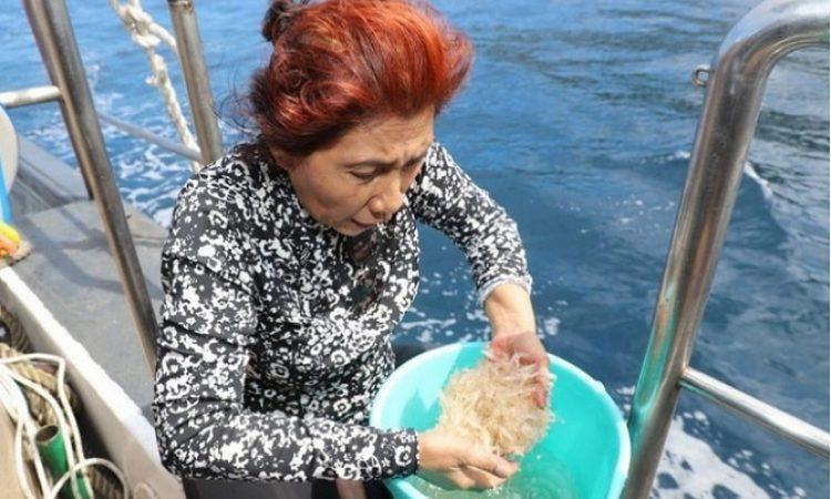 Menteri Kelautan dan Perikanan periode 2014-2019 Susi Pudjiastuti saat menebar benih lobster. (Ist/Dok KKP)